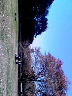 今日のキヌタ公園